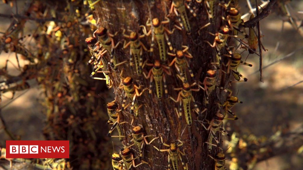 Preventing a plague: fighting Kenya's locusts