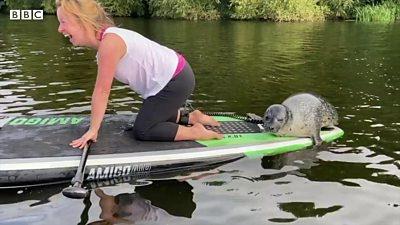 Seal joins in with River Witham paddleboard lesson