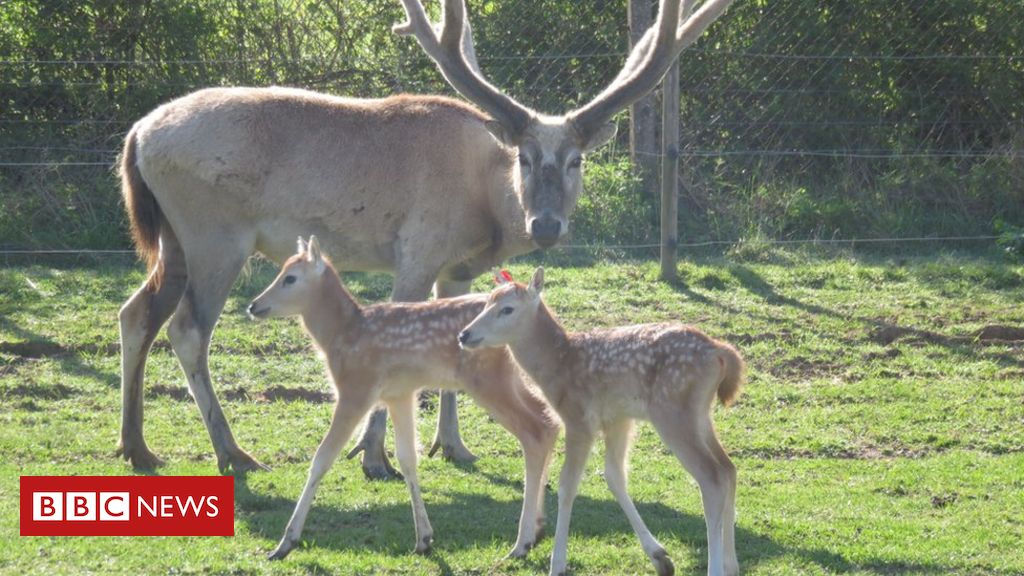 Covid-19: Funding crisis threatens zoos』 vital conservation work